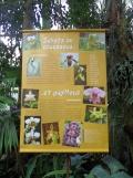 1001 Orchidées .. (62)