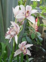 1001 Orchidées .. (7)
