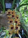 1001 Orchidées .. (8)