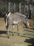 Zoo de Vincennes (103)