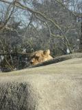 Zoo de Vincennes (116)