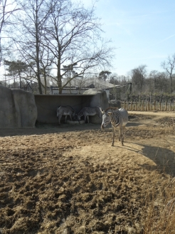 Zoo de Vincennes (157)