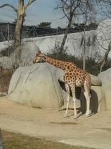 Zoo de Vincennes (177)