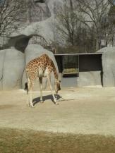 Zoo de Vincennes (190)