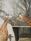 Zoo de Vincennes (195)