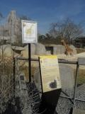 Zoo de Vincennes (214)