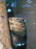 Zoo de Vincennes (251)