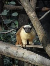 Zoo de Vincennes (281)