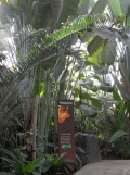 Zoo de Vincennes (290)