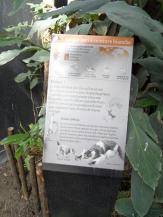 Zoo de Vincennes (293)