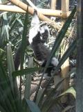 Zoo de Vincennes (298)