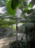 Zoo de Vincennes (304)