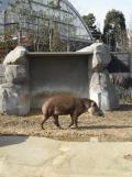 Zoo de Vincennes (310)