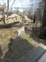 Zoo de Vincennes (320)