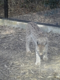 Zoo de Vincennes (322)