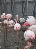 Zoo de Vincennes (342)