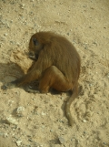 Zoo de Vincennes (355)