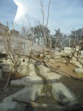 Zoo de Vincennes (358)