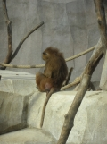 Zoo de Vincennes (364)