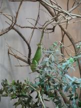 Zoo de Vincennes (386)
