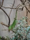Zoo de Vincennes (387)