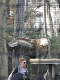 Zoo de Vincennes (389)