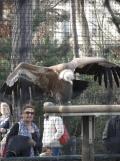 Zoo de Vincennes (390)