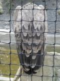 Zoo de Vincennes (393)
