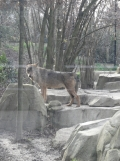 Zoo de Vincennes (401)