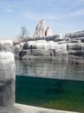 Zoo de Vincennes (43)