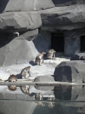 Zoo de Vincennes (51)