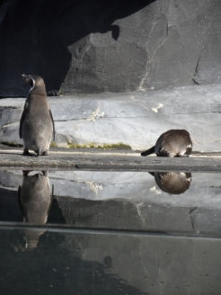 Zoo de Vincennes (53)