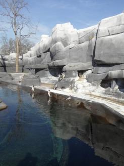 Zoo de Vincennes (66)