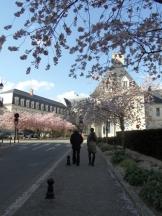 3. Le Palais Jacques-Cœur (254)
