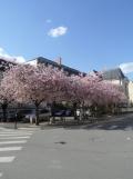 3. Le Palais Jacques-Cœur (255)