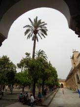 3.Catédral de Córdoba (7)