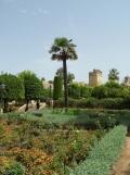 Alcázar de los Reyes Cristianos (74)
