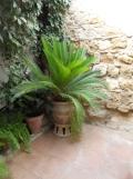 Casa Andalusi (24)