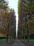 Parc de Sceaux (27)