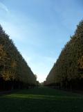 Parc de Sceaux (29)