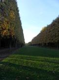 Parc de Sceaux (30)