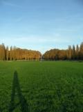 Parc de Sceaux (35)