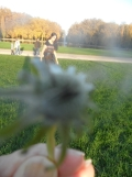 Parc de Sceaux (43)