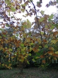 Parc de Sceaux (49)