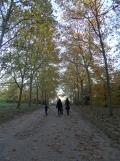 Parc de Sceaux (50)