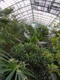 Jardin des serres d'Auteuil (106)