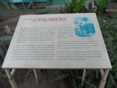 Jardin des serres d'Auteuil (53)