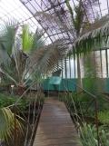 Jardin des serres d'Auteuil (59)