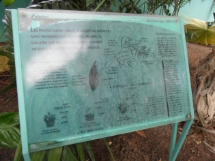 Jardin des serres d'Auteuil (62)