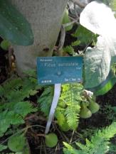 Jardin des serres d'Auteuil (82)